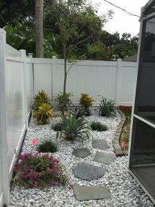 QueenPalm-rear-right-after
